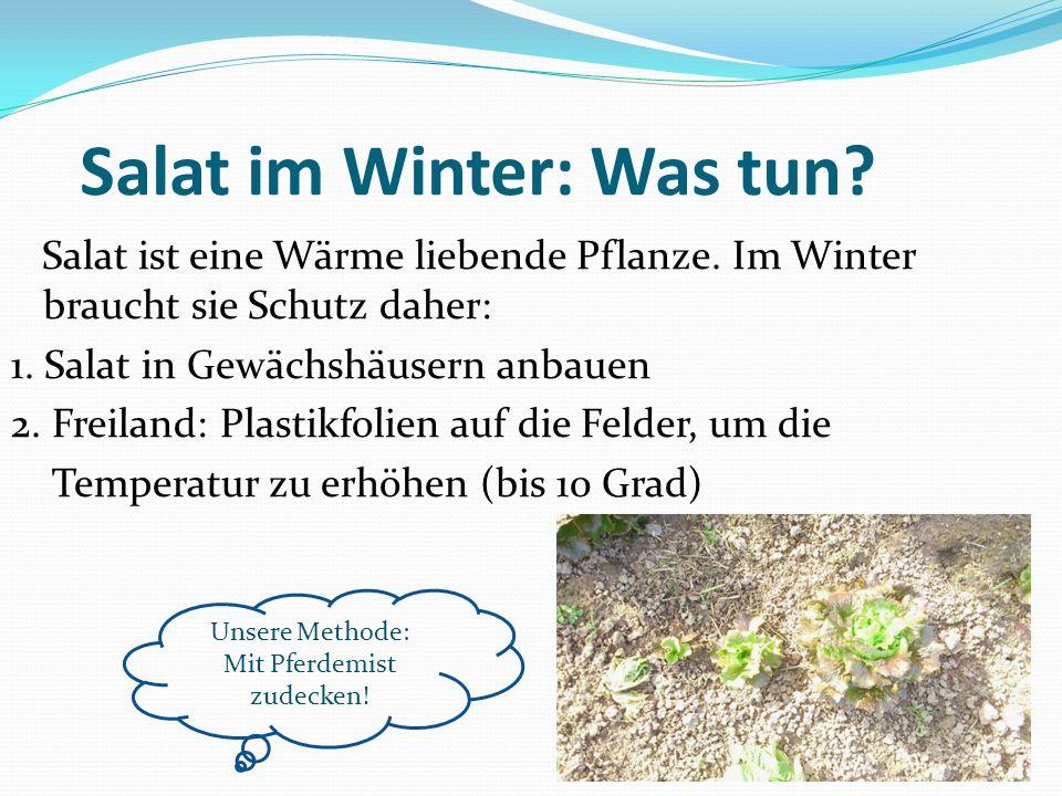 Salat im Winter: Was tun