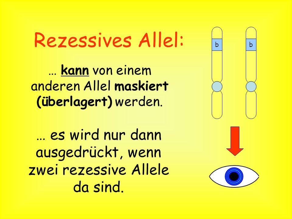 Rezessives Allel: b. … kann von einem anderen Allel maskiert (überlagert) werden.