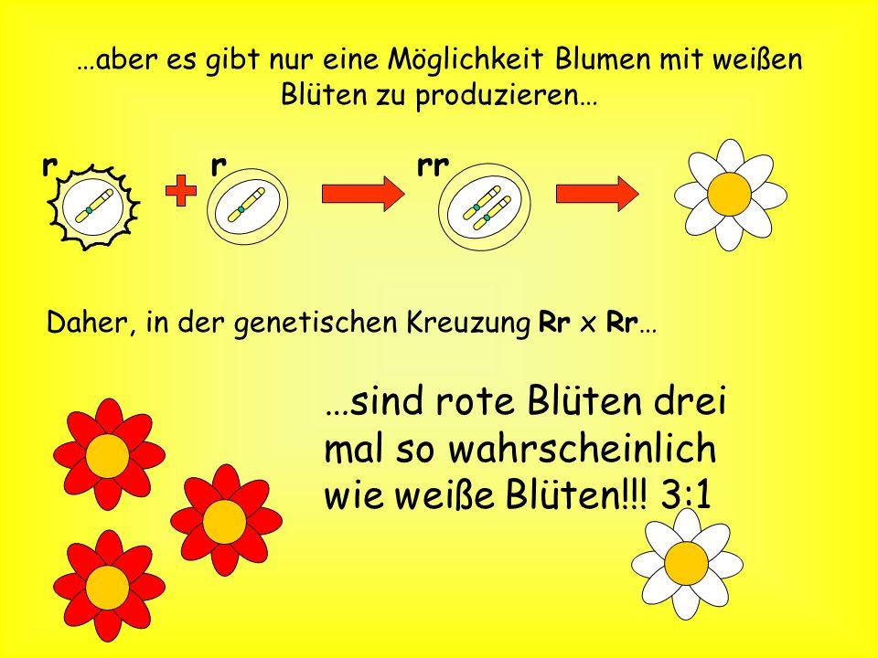 …sind rote Blüten drei mal so wahrscheinlich wie weiße Blüten!!! 3:1