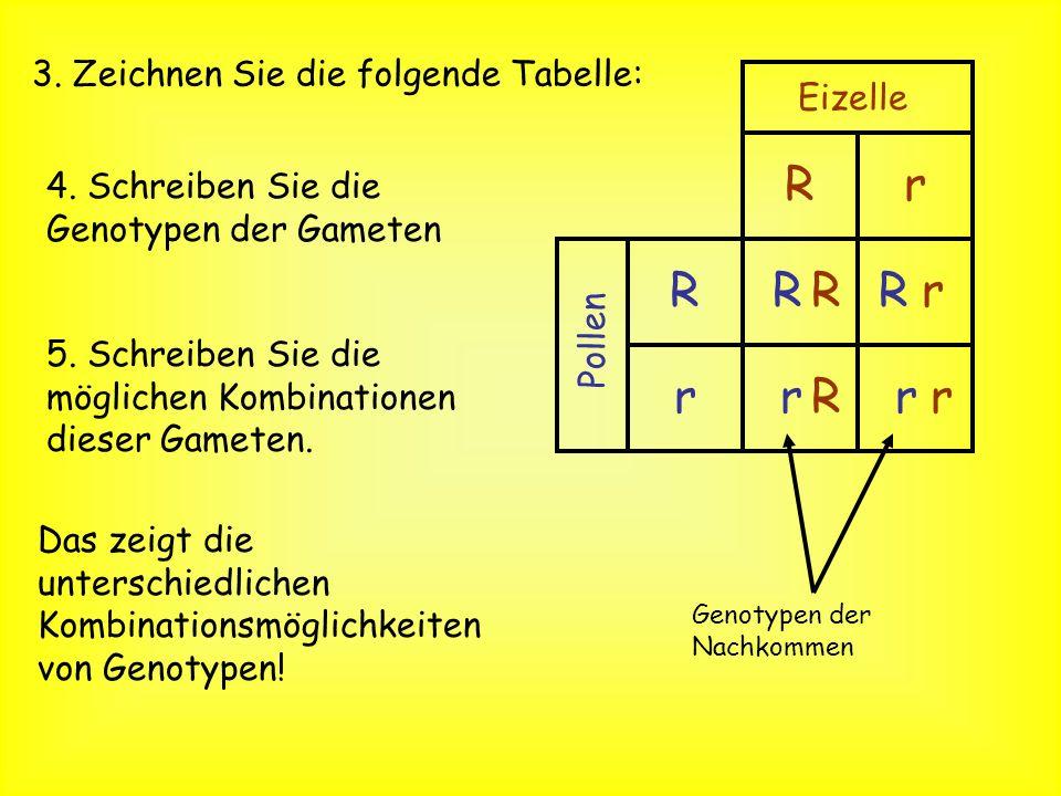 R r R R R r r R r r 3. Zeichnen Sie die folgende Tabelle: Eizelle