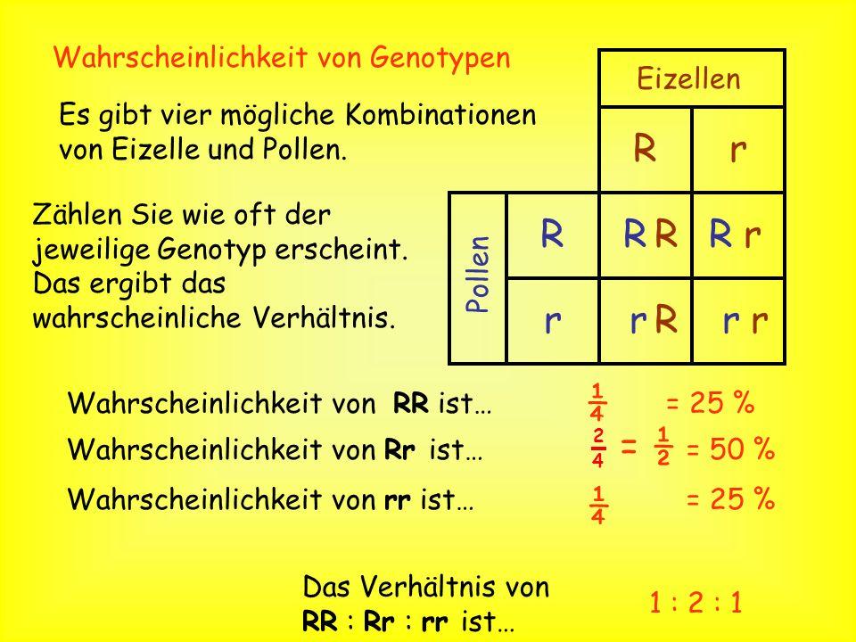 R r ¼ = ½ ¼ Wahrscheinlichkeit von Genotypen Eizellen Pollen