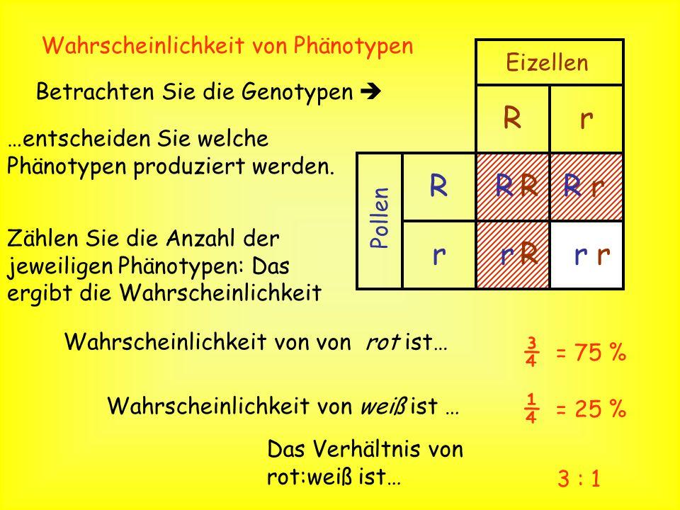 R r ¾ ¼ Wahrscheinlichkeit von Phänotypen Eizellen