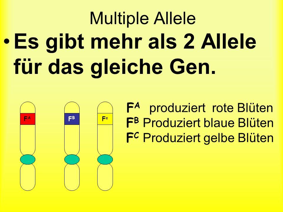 Es gibt mehr als 2 Allele für das gleiche Gen.