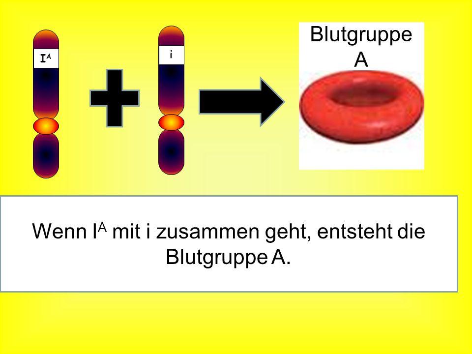 Wenn IA mit i zusammen geht, entsteht die Blutgruppe A.