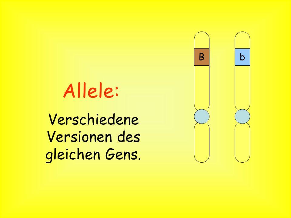 Verschiedene Versionen des gleichen Gens.