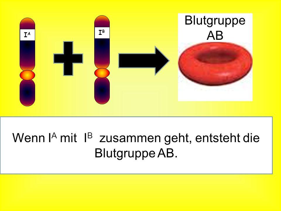 Wenn IA mit IB zusammen geht, entsteht die Blutgruppe AB.