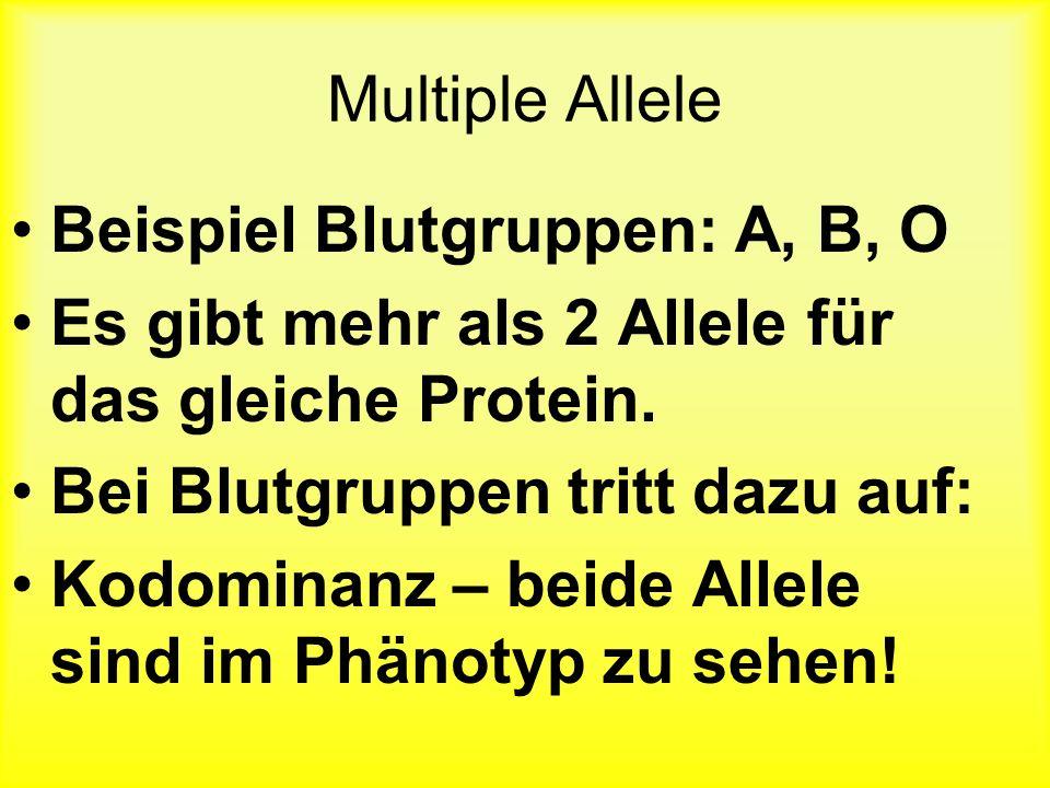 Multiple Allele Beispiel Blutgruppen: A, B, O. Es gibt mehr als 2 Allele für das gleiche Protein. Bei Blutgruppen tritt dazu auf: