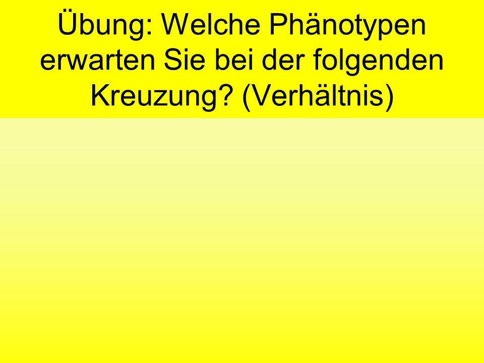 Übung: Welche Phänotypen erwarten Sie bei der folgenden Kreuzung