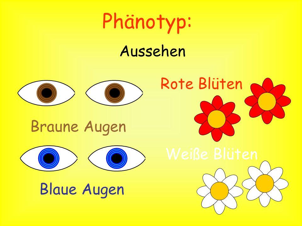 Phänotyp: Aussehen Rote Blüten Braune Augen Weiße Blüten Blaue Augen