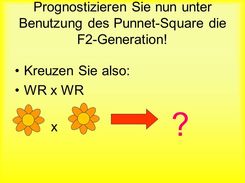 Prognostizieren Sie nun unter Benutzung des Punnet-Square die F2-Generation!