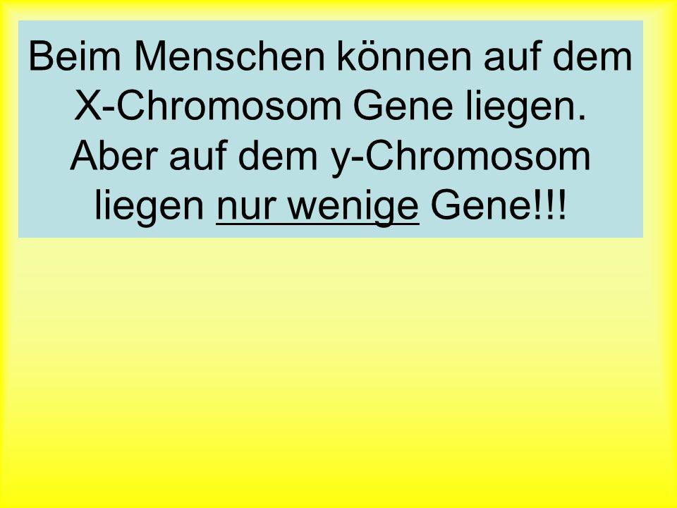 Beim Menschen können auf dem X-Chromosom Gene liegen