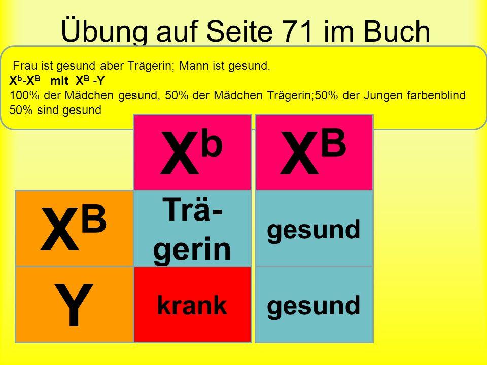 Xb XB XB Y XBXb XBXB XbY XBY Trä-gerin Übung auf Seite 71 im Buch