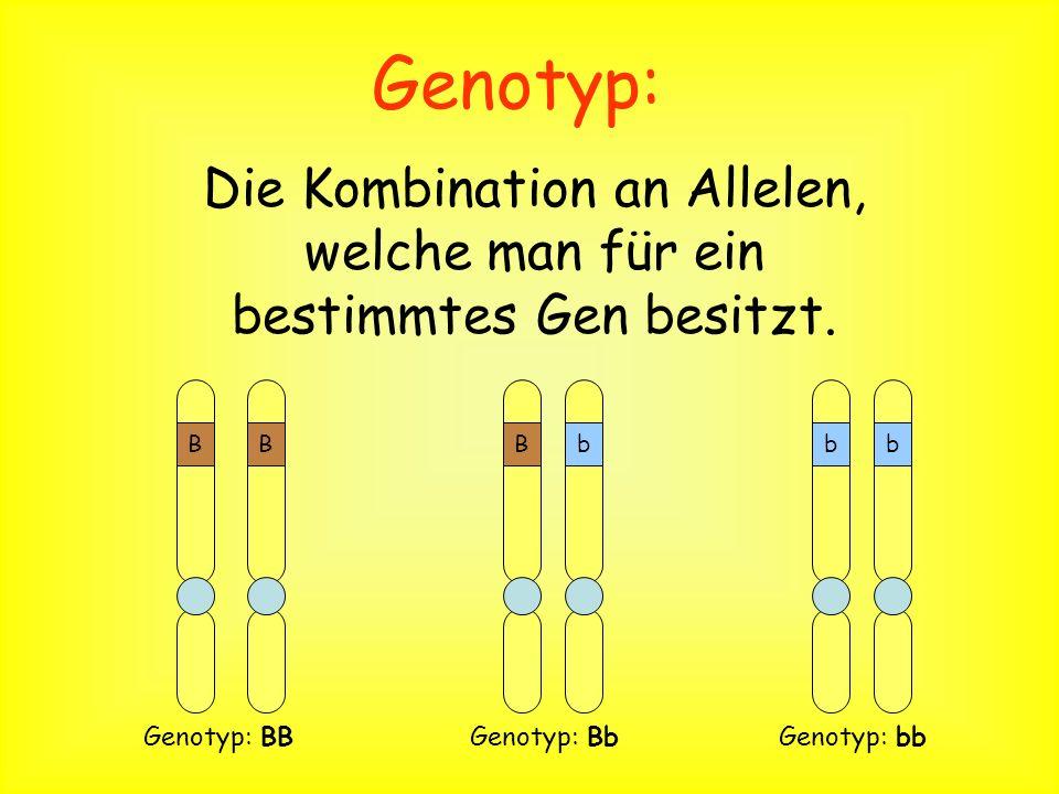 Die Kombination an Allelen, welche man für ein bestimmtes Gen besitzt.