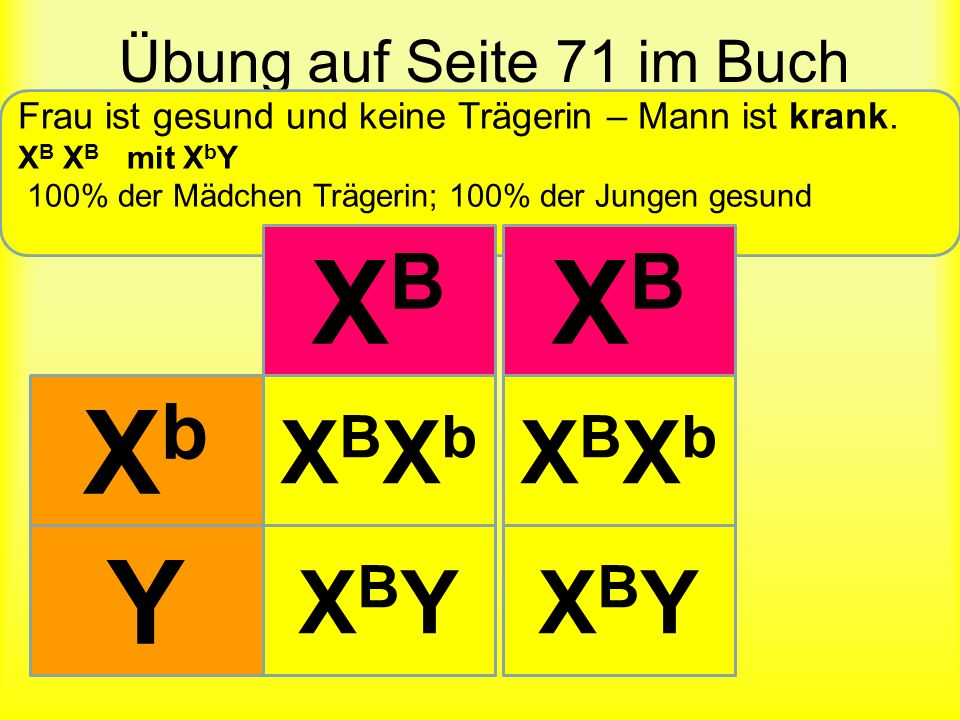 XB XB Xb Y XBXb XBXb XBY XBY Übung auf Seite 71 im Buch