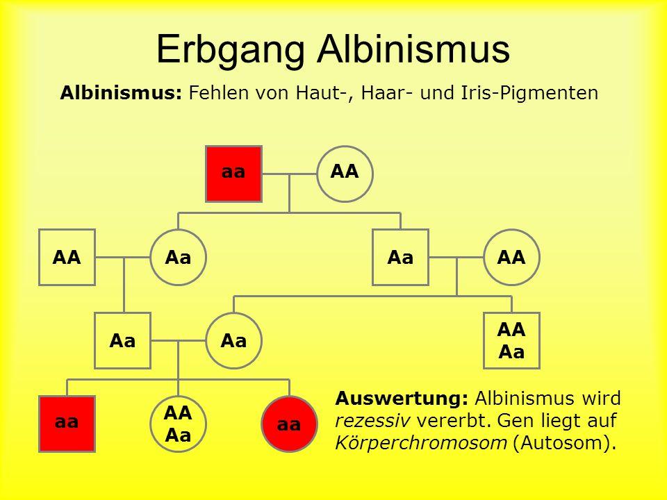 Erbgang Albinismus Albinismus: Fehlen von Haut-, Haar- und Iris-Pigmenten. aa. AA. AA. Aa. Aa.