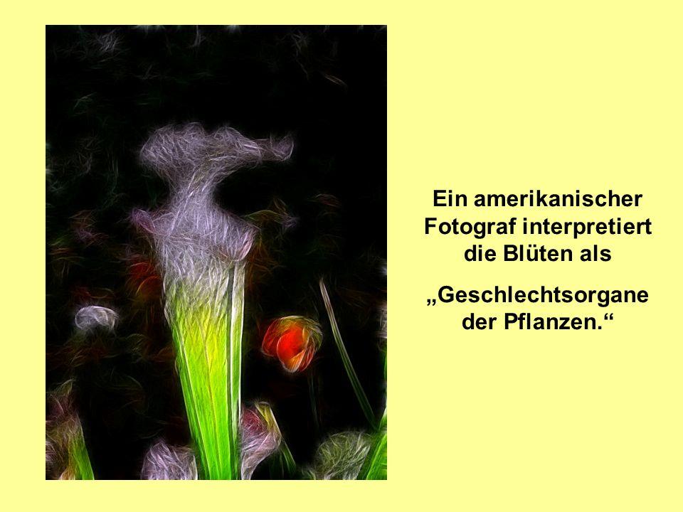 Ein amerikanischer Fotograf interpretiert die Blüten als