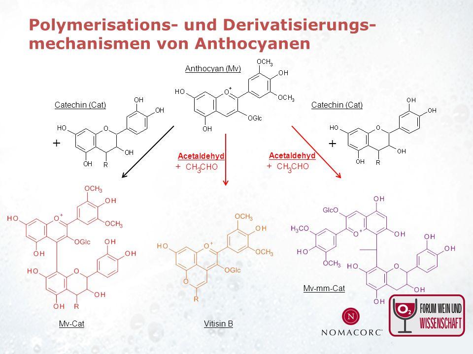 Polymerisations- und Derivatisierungs- mechanismen von Anthocyanen
