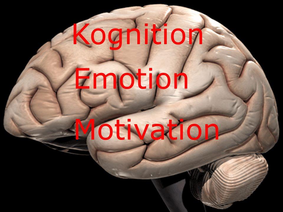 Warum kognitiv Kognition Emotion Motivation