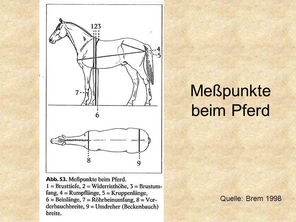 Meßpunkte beim Pferd Quelle: Brem 1998