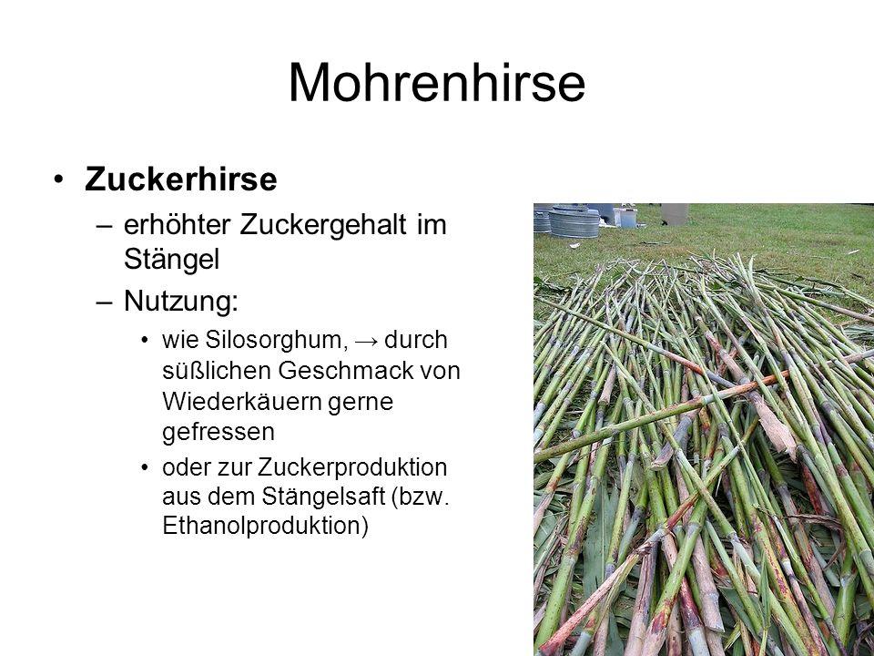 Mohrenhirse Zuckerhirse erhöhter Zuckergehalt im Stängel Nutzung: