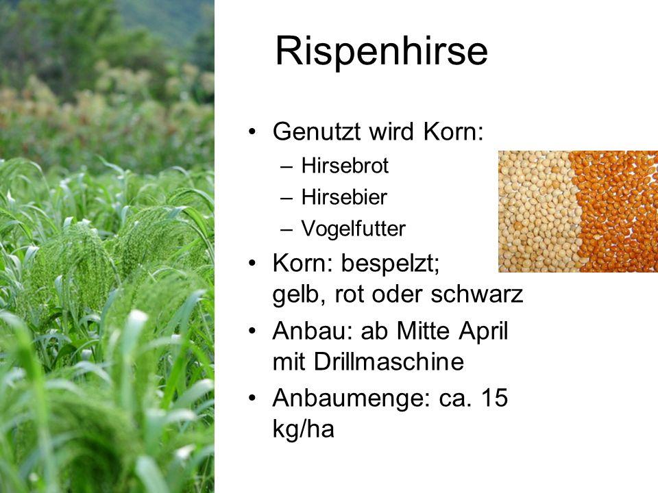 Rispenhirse Genutzt wird Korn: Korn: bespelzt; gelb, rot oder schwarz