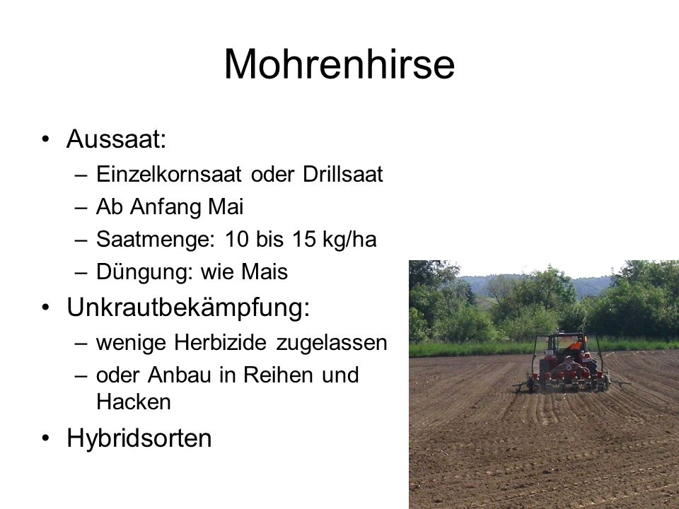 Mohrenhirse Aussaat: Unkrautbekämpfung: Hybridsorten