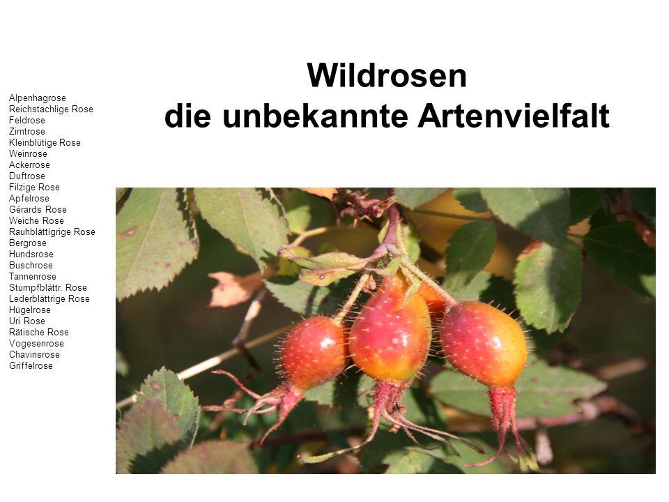 Wildrosen die unbekannte Artenvielfalt