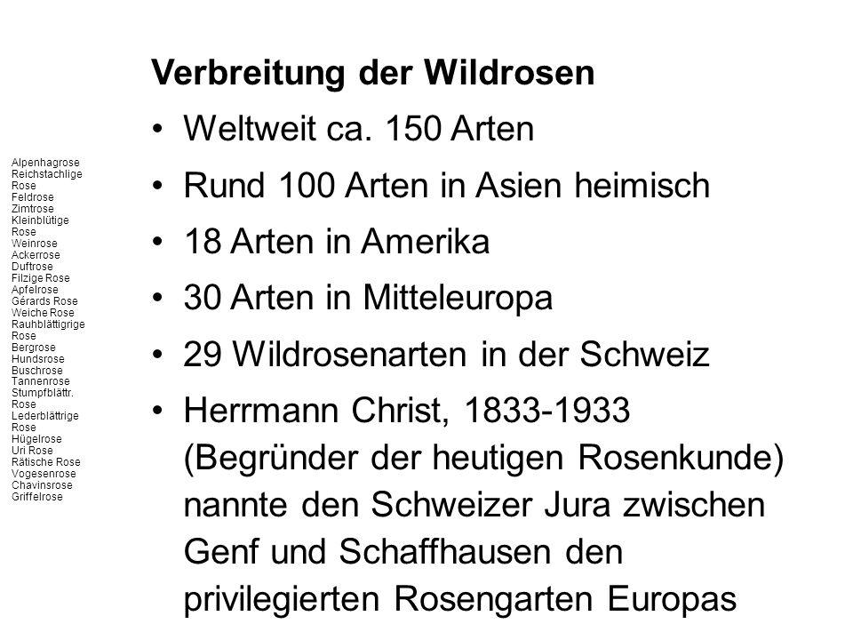 Verbreitung der Wildrosen Weltweit ca. 150 Arten