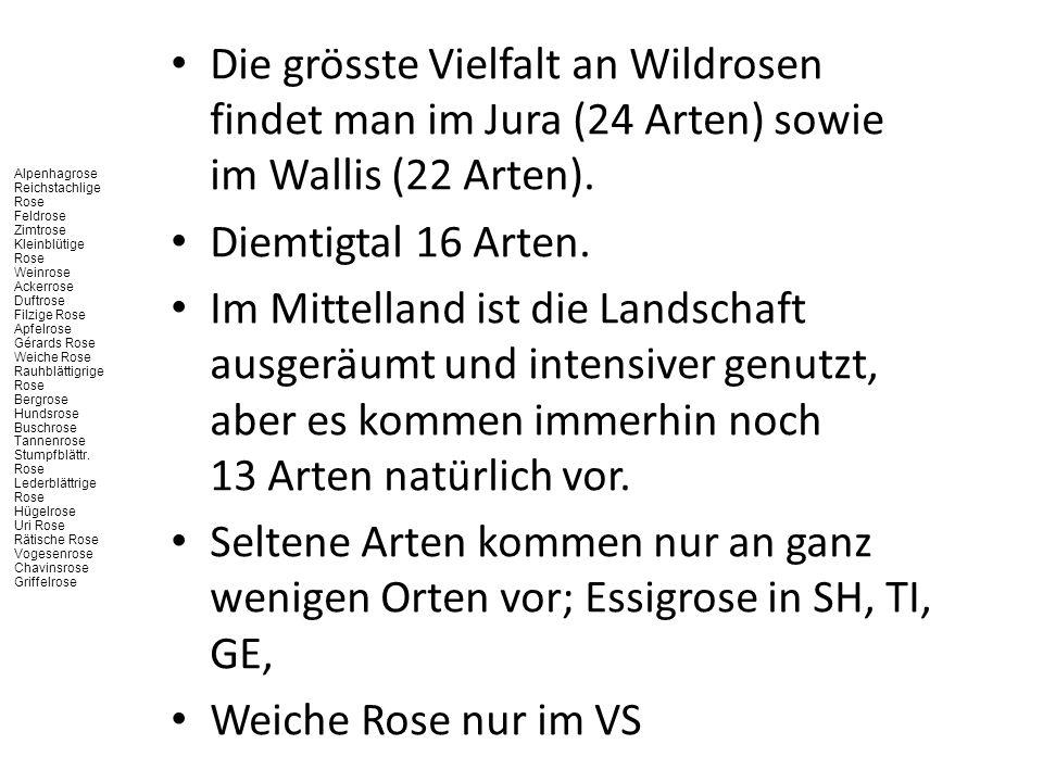Die grösste Vielfalt an Wildrosen findet man im Jura (24 Arten) sowie im Wallis (22 Arten).