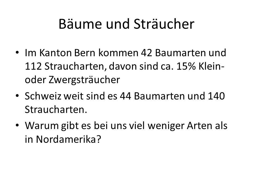 Bäume und Sträucher Im Kanton Bern kommen 42 Baumarten und 112 Straucharten, davon sind ca. 15% Klein- oder Zwergsträucher.