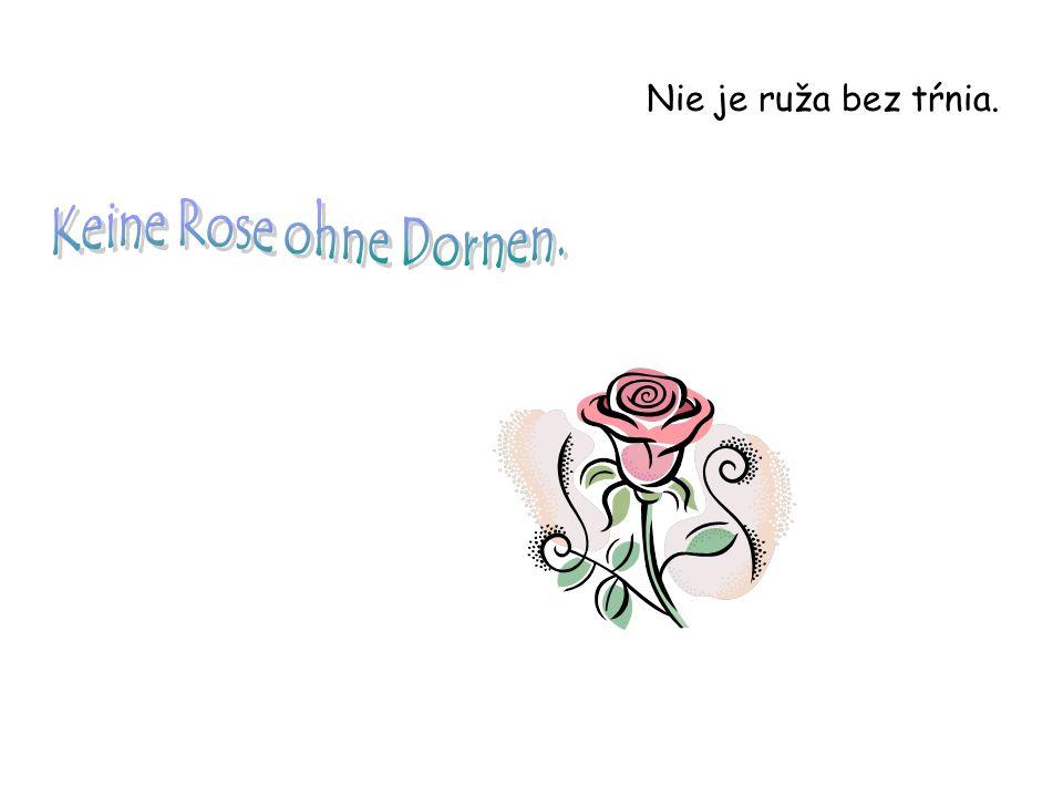 Nie je ruža bez tŕnia. Keine Rose ohne Dornen.