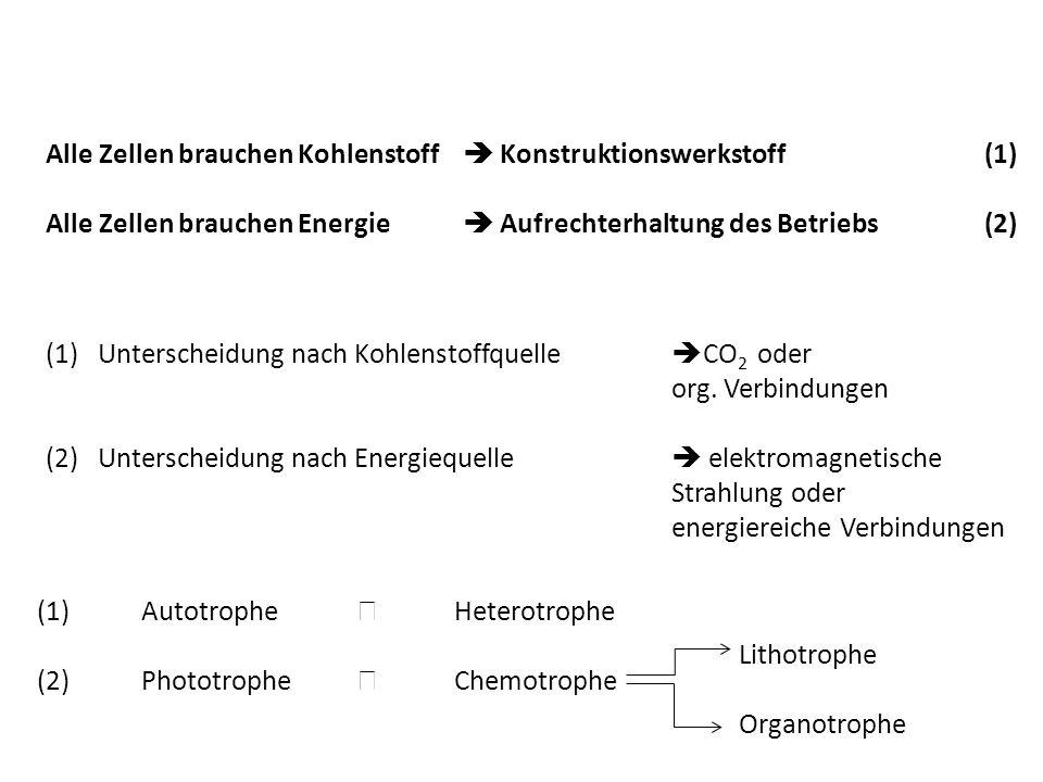 Alle Zellen brauchen Kohlenstoff  Konstruktionswerkstoff (1)