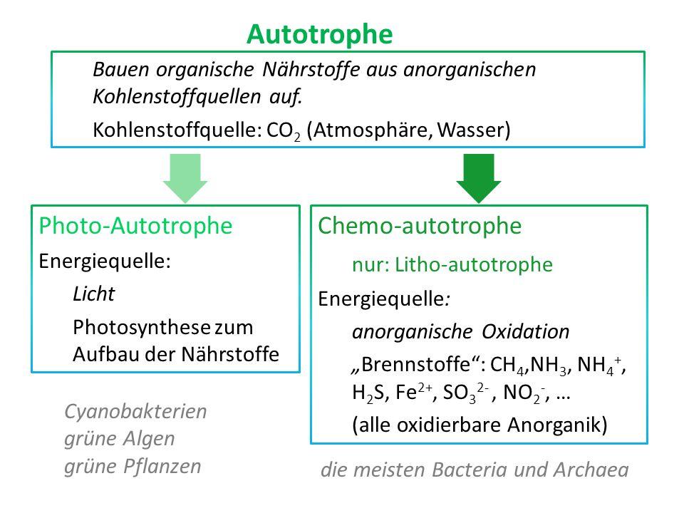Autotrophe Photo-Autotrophe Chemo-autotrophe nur: Litho-autotrophe