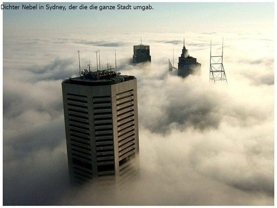 Dichter Nebel in Sydney, der die die ganze Stadt umgab.