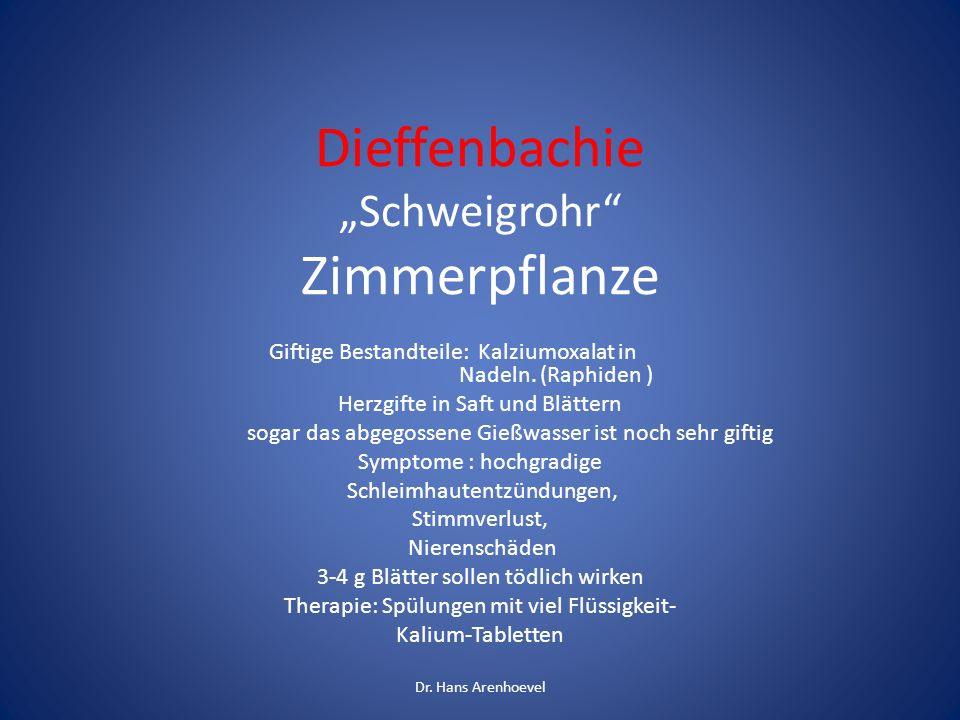 """Dieffenbachie """"Schweigrohr Zimmerpflanze"""