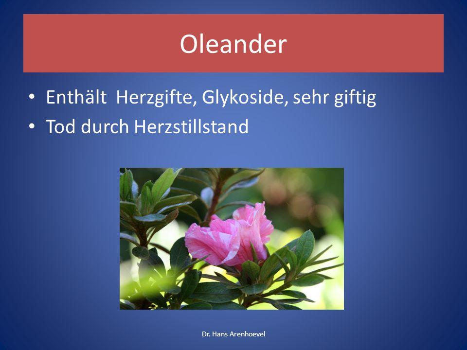 Oleander Enthält Herzgifte, Glykoside, sehr giftig