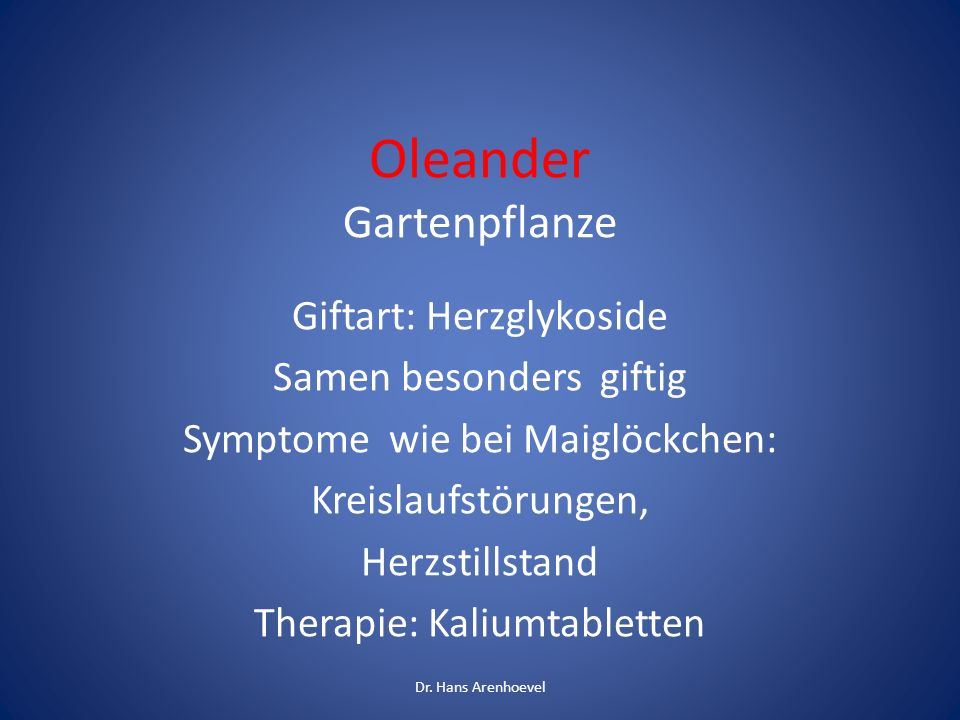 Oleander Gartenpflanze