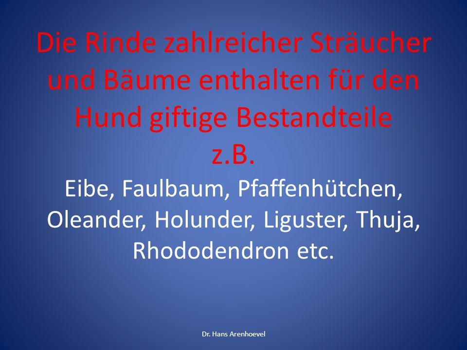 Die Rinde zahlreicher Sträucher und Bäume enthalten für den Hund giftige Bestandteile z.B. Eibe, Faulbaum, Pfaffenhütchen, Oleander, Holunder, Liguster, Thuja, Rhododendron etc.