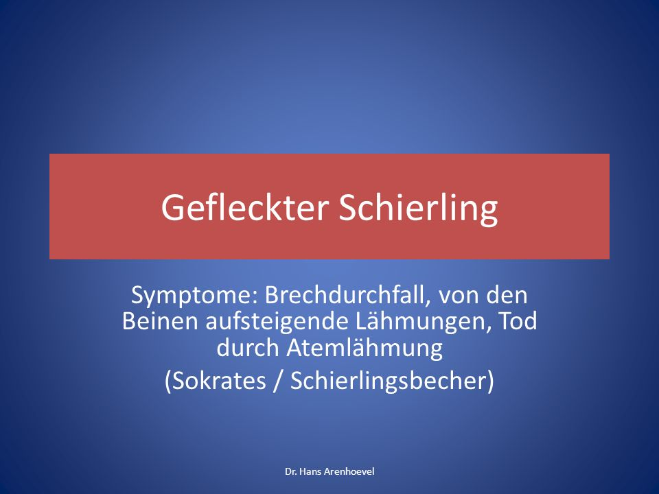 Gefleckter Schierling