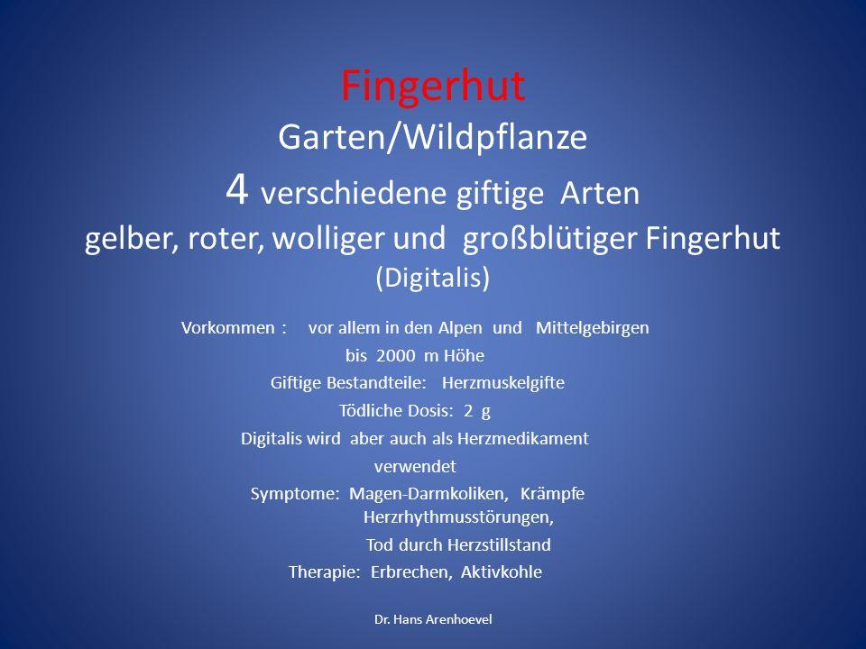 Fingerhut Garten/Wildpflanze 4 verschiedene giftige Arten gelber, roter, wolliger und großblütiger Fingerhut (Digitalis)