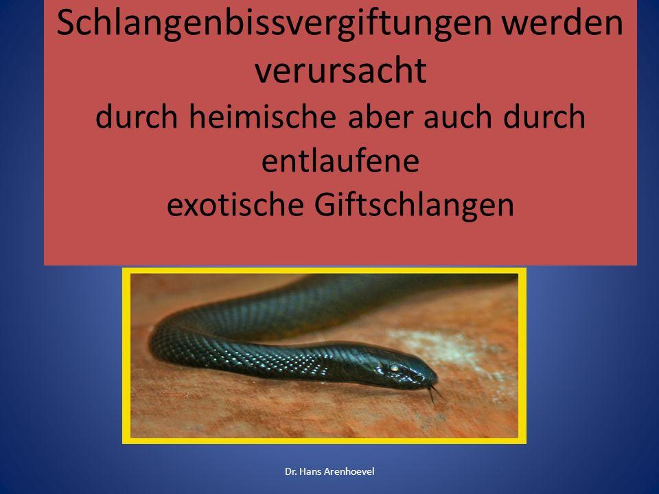 Schlangenbissvergiftungen werden verursacht durch heimische aber auch durch entlaufene exotische Giftschlangen