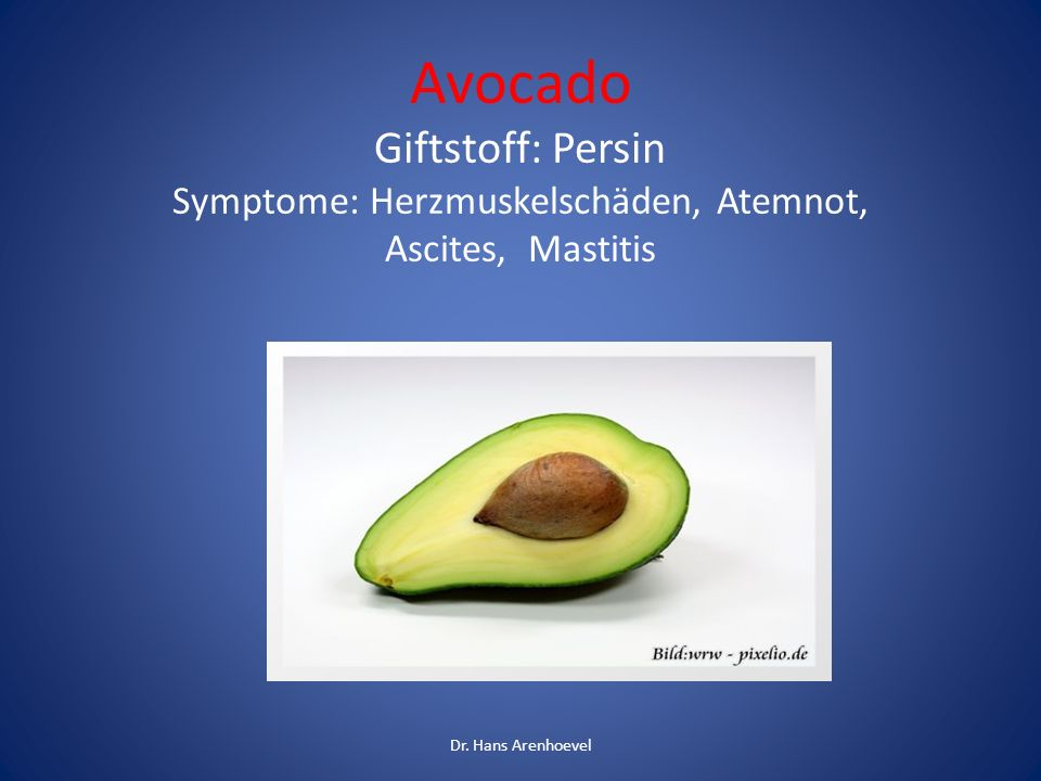 Avocado Giftstoff: Persin Symptome: Herzmuskelschäden, Atemnot, Ascites, Mastitis