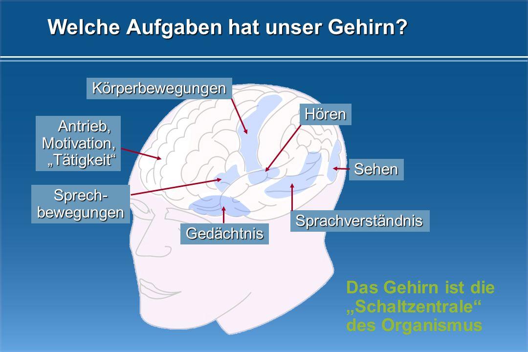 Welche Aufgaben hat unser Gehirn