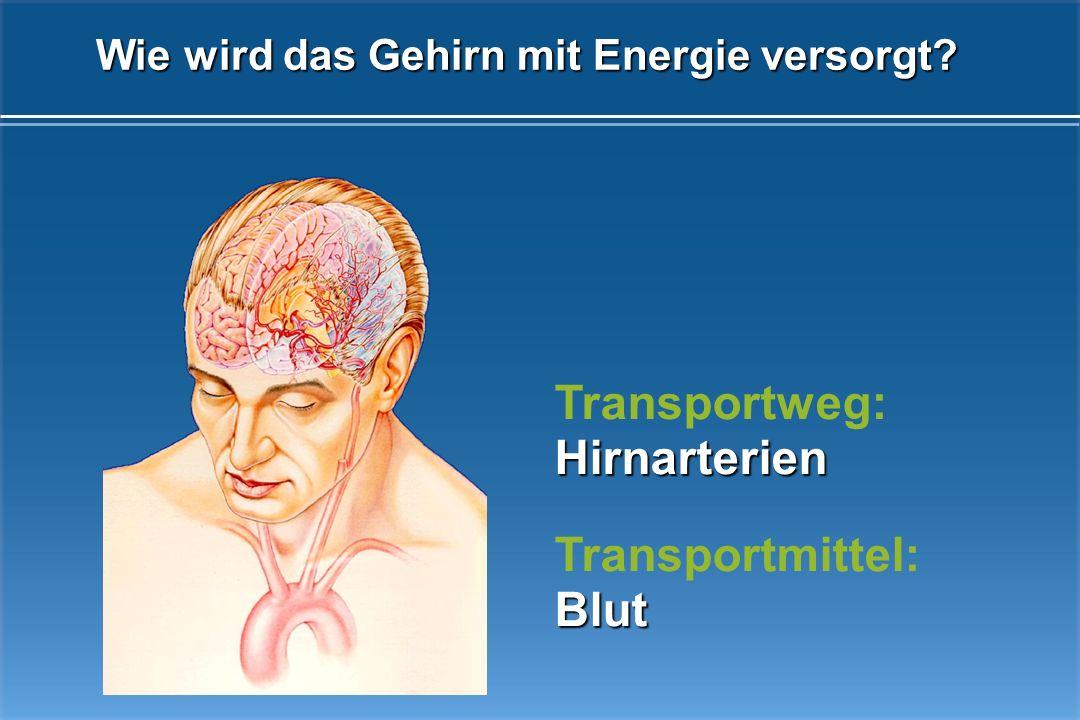Wie wird das Gehirn mit Energie versorgt