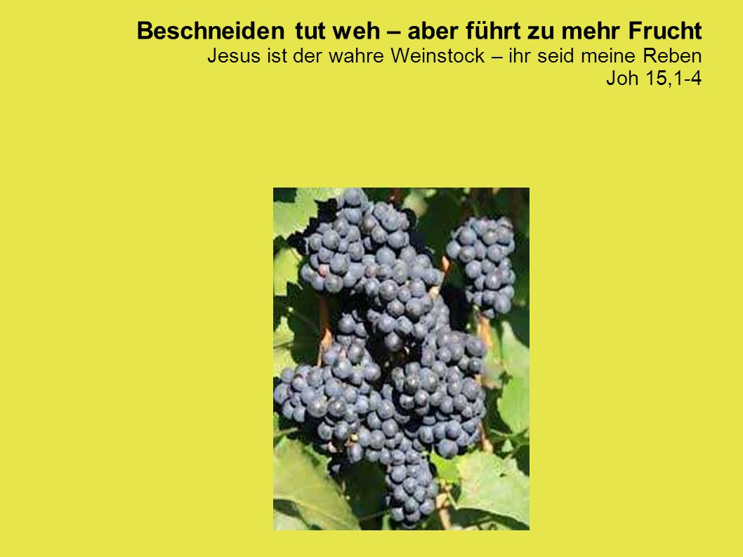 Beschneiden tut weh – aber führt zu mehr Frucht Jesus ist der wahre Weinstock – ihr seid meine Reben Joh 15,1-4