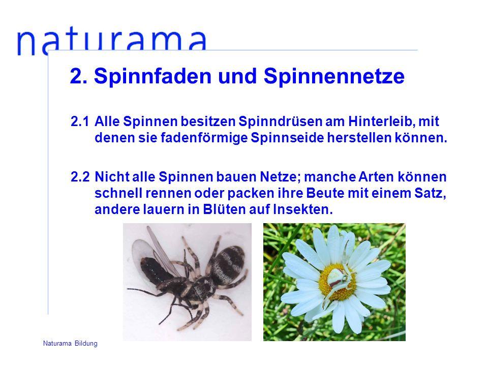 2. Spinnfaden und Spinnennetze