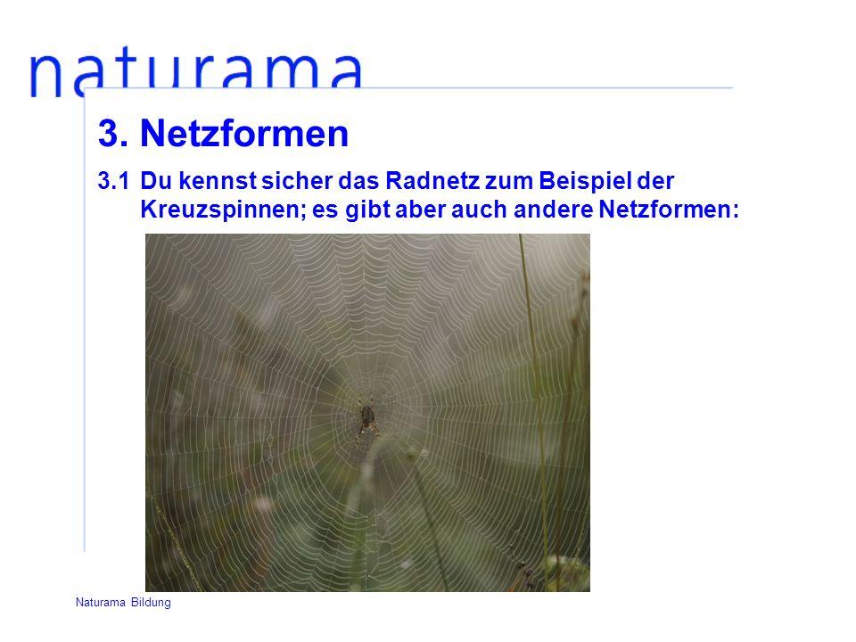 3. Netzformen 3.1 Du kennst sicher das Radnetz zum Beispiel der Kreuzspinnen; es gibt aber auch andere Netzformen: