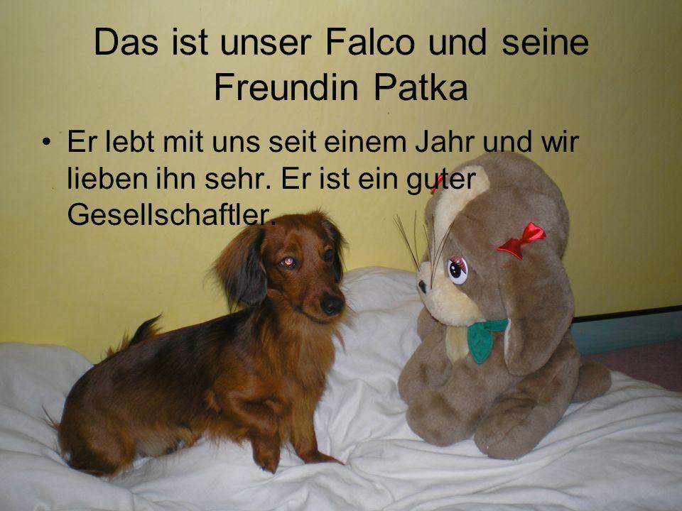 Das ist unser Falco und seine Freundin Patka