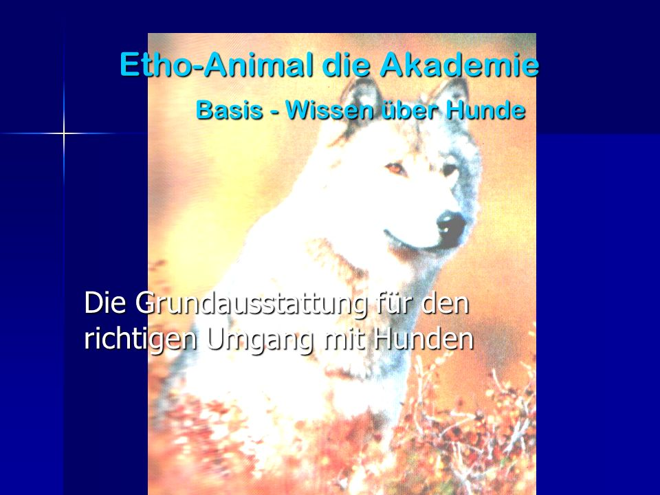 Etho-Animal die Akademie Basis - Wissen über Hunde
