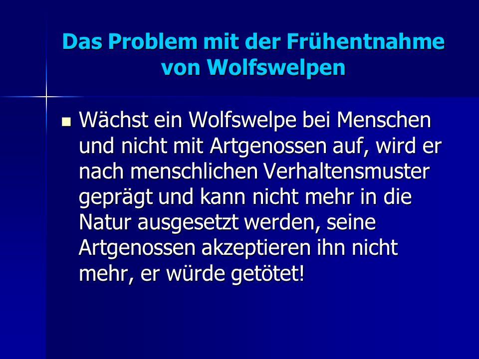 Das Problem mit der Frühentnahme von Wolfswelpen